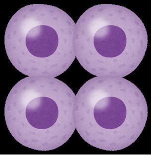 細胞の増殖