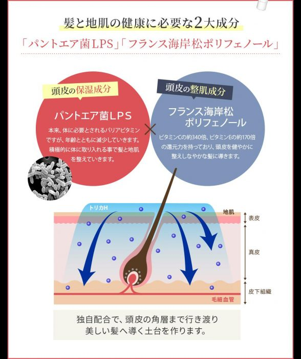 抗酸化力の説明